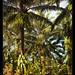 Robert's garden, Costa Rica (5)