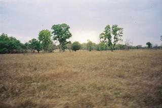 Kanha grassland