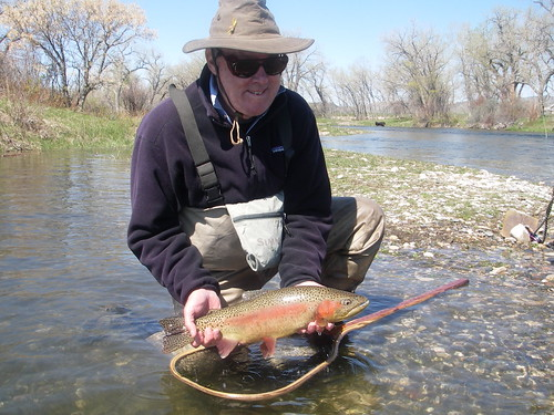Bighorn fishing report changing flows bighorn river for Bighorn river fishing report
