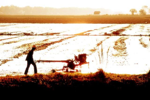 Ploughing Fields Near Lake Inle, Burma