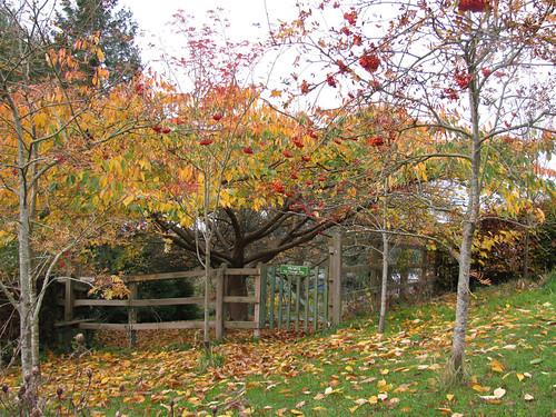 Morning walk round the gardens