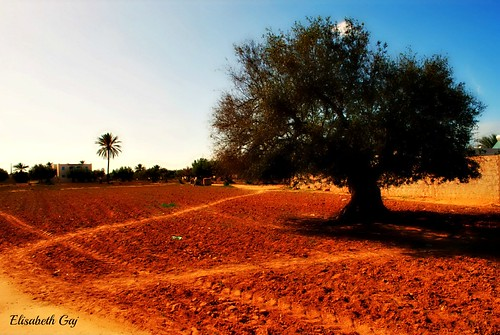travel trees landscape tunisia djerba afryka elisabethgaj 100commentgroup