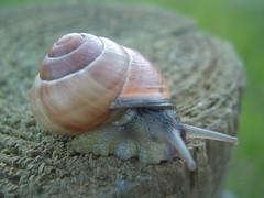 Snail awake