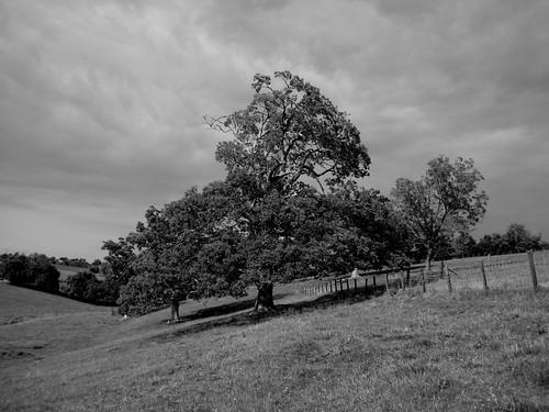 blackandwhite bw white black tree rural fence landscape farm kentucky hill