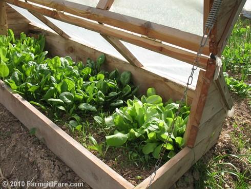 In my kitchen garden do it yourself kitchen garden for Making a kitchen garden