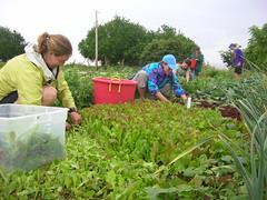 flower(0.0), garden(0.0), produce(0.0), agriculture(1.0), farm(1.0), field(1.0), soil(1.0), gardener(1.0), harvest(1.0), farmworker(1.0), crop(1.0), plantation(1.0),