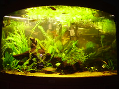 Corner fish tanks, The tank