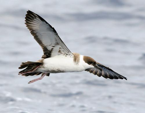 aves-marinas