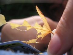 Leaf Keeper