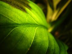 Backlit Plant