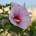 Flower in Bloom - Baku, Azerbaijan