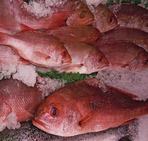These fish look worried