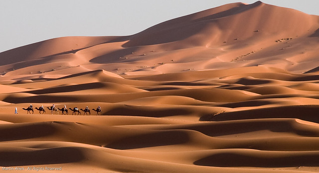 Camel Train on the Dunes
