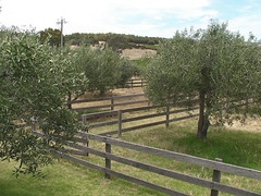 home fencing, land lot, ranch, picket fence, split rail fence, tree, property, pasture,