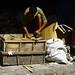 Membuat sesuatu dari kardus. : A laborer makes a crate with used cardboard. Photo by Agam