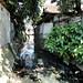 Sampah di saluran air : Many rubish in canal