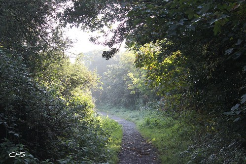 A misty morning on the old railwayline at Calenick (Newham Trial), Truro by Stocker Images