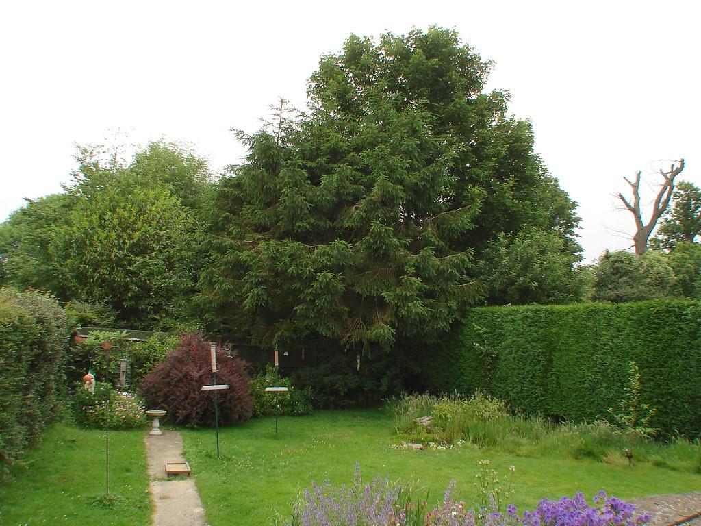Small Front Garden Ideas - FROST GARDEN CENTRE