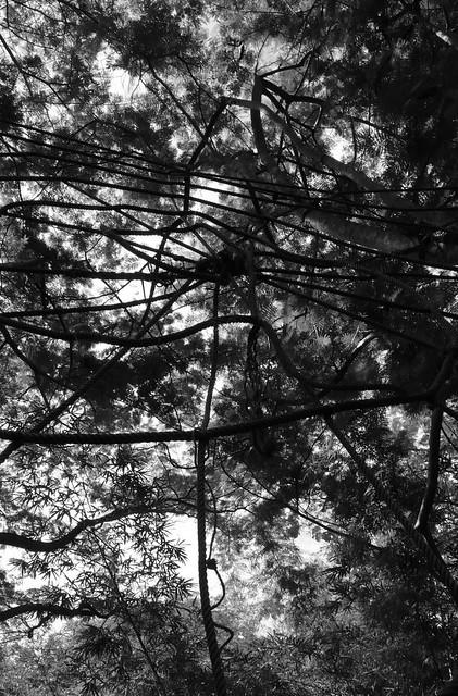 thailandtrees-22