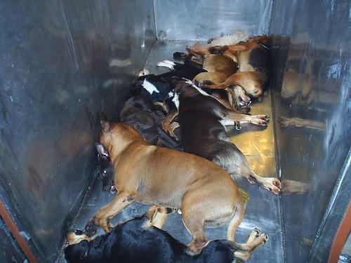 Petition ban animal gas chambers for Camarade de chambre