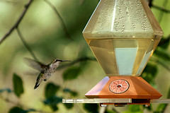 wren(0.0), pollinator(1.0), animal(1.0), hummingbird(1.0), fauna(1.0), bird feeder(1.0), bird(1.0),