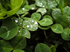 annual plant, shrub, dew, leaf, water, plant, macro photography, herb, flora, green, moisture,