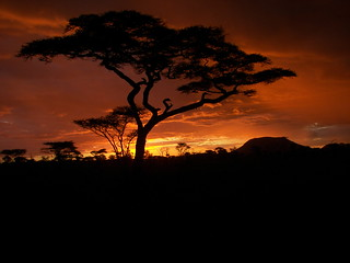 - Fading sunset in the Serengeti