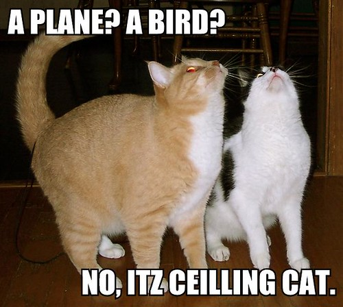 A Plane? A Bird? No, it's ceilling cat!
