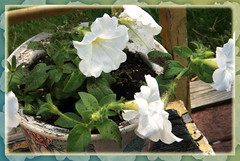 flower, floral design, plant, flora, floristry,