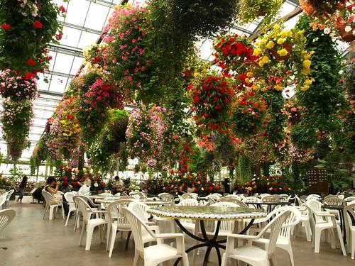 fuchsia garden