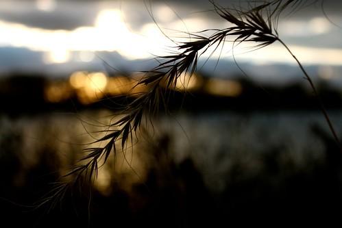 sunset silverlake rochestermn