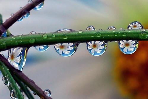 liquid petals