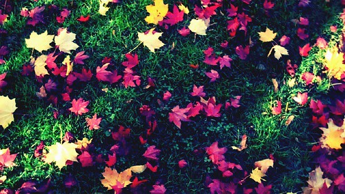 Fall leaves 05