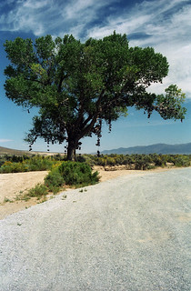 The Middlegate Shoe Tree