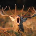 The challenge by Greg Morgan wildlife