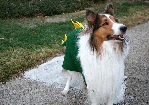 A Collie In Dragon's Clothing...
