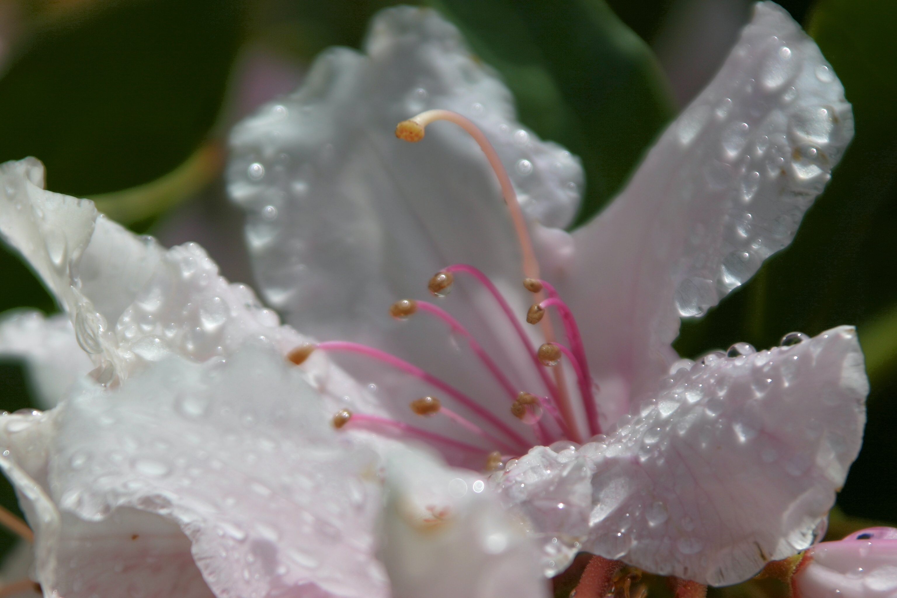 Flower after a mid-day rain