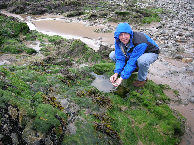 Liam finds chanies on the Waterford coast