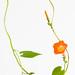 Wildflower and Vine
