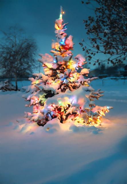 Ground Christmas Lights