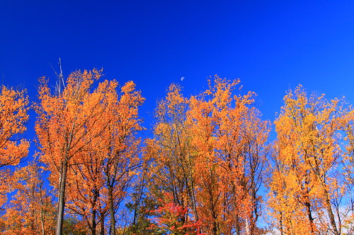 autumn trees usa moon color fall nature america maryland bluesky foliage clarksburg ef28135mmf3556isusm canoneos50d markaveritt