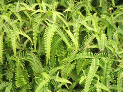 rainforest, leaf, plant, green, ostrich fern, ferns and horsetails, plant stem, vegetation,