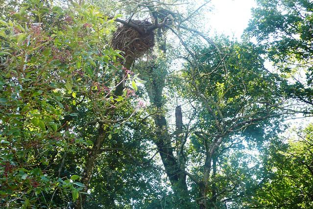 Stork nests at Altreu
