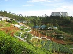 Bois Cheri Tea Factory Tour