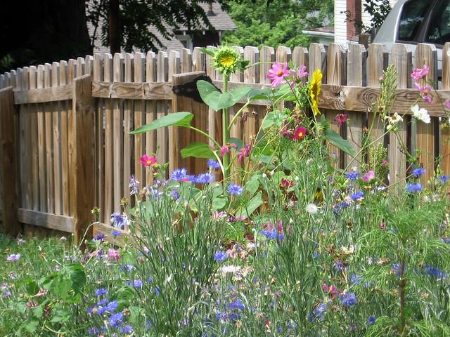 Martha Stewart Shaker Can Garden More Flowers Some Like Flickr