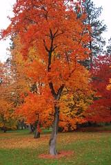 Finch Arboretum, Spokane, Wa  Oct 2010