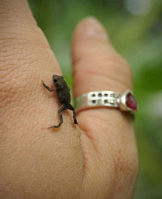 tiny toad 4