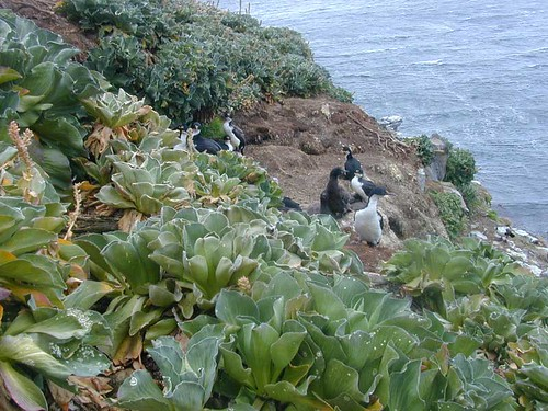 voyage animal geotagged vegetation kerguelen stationalpinejosephfourier geo:lat=49329597 geo:lon=7018753 bassealtitude