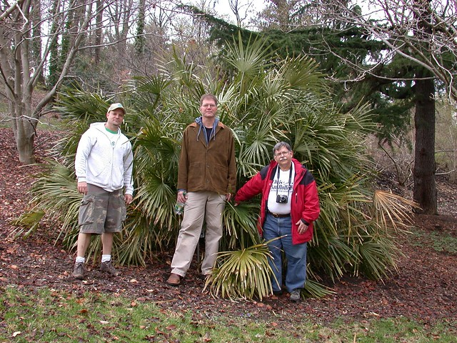 Needle palm and friends