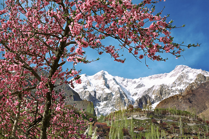 Blossom Season in Hunza Valley.